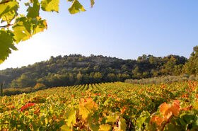 Provence Herbst